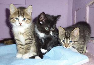 Chatons nés le 14 mars.