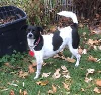 Moxie - nice young terrier mix!
