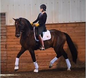 Horse boarding available at dressage barn
