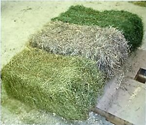 Square bales of hay