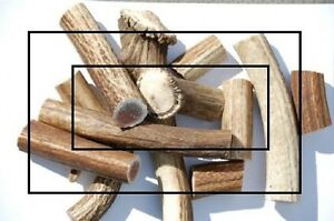 Fresh antler dog chews (Best price, best quality) Kitchener / Waterloo Kitchener Area image 1