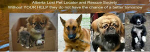 Alberta Lost Pet Locator and Rescue Society Rescues for Adoption
