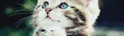 ilike-cat