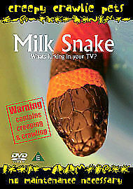 Creepy Crawlie Pets  Milk Snake DVDi 2007 - <span itemprop=availableAtOrFrom>Laxey, United Kingdom</span> - Creepy Crawlie Pets  Milk Snake DVDi 2007 - Laxey, United Kingdom