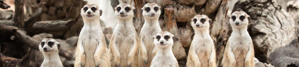 Meerkat Clothing