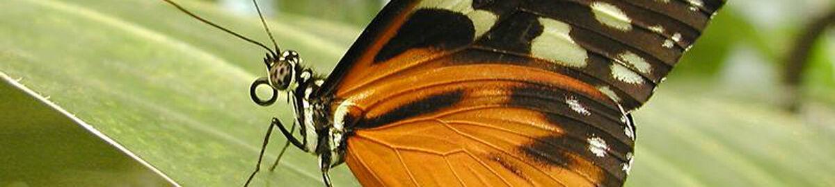 Bugfacts