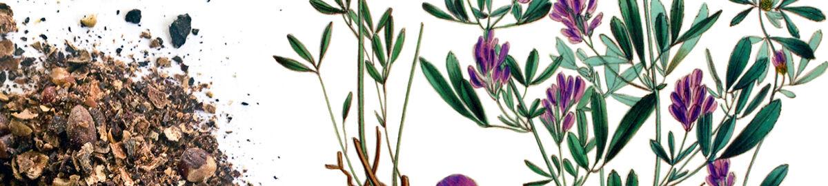 Little Woods: Herbs & Teas