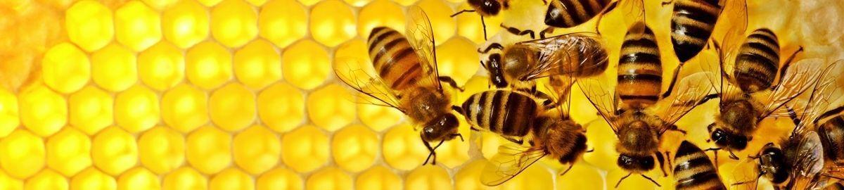 Humble Bee UK