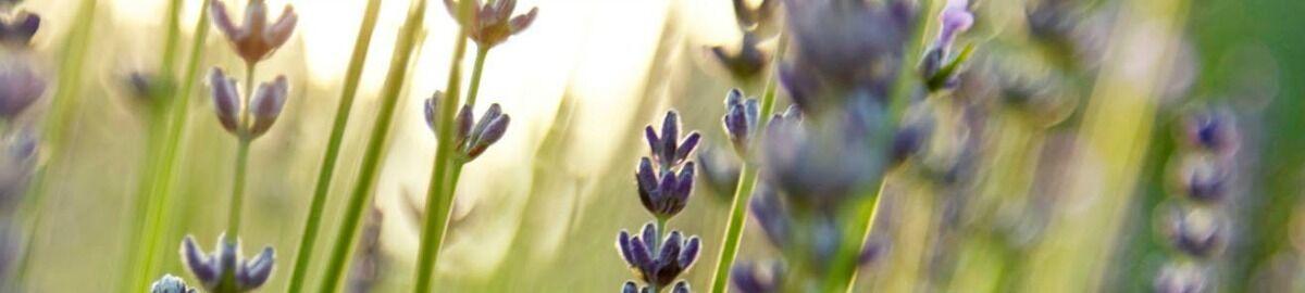 Narrawong Lavender
