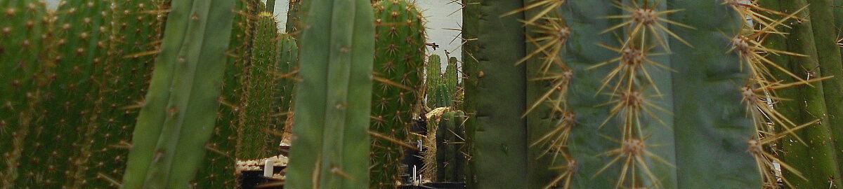 Mullumbimby Botanicals