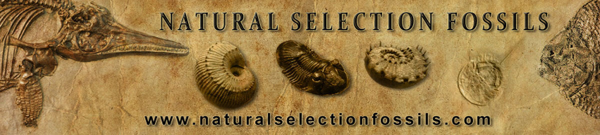 Natural Selection Fossils Shop