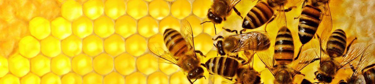 Humble Bee US