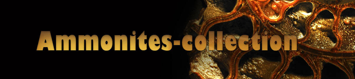 ammonites-collection