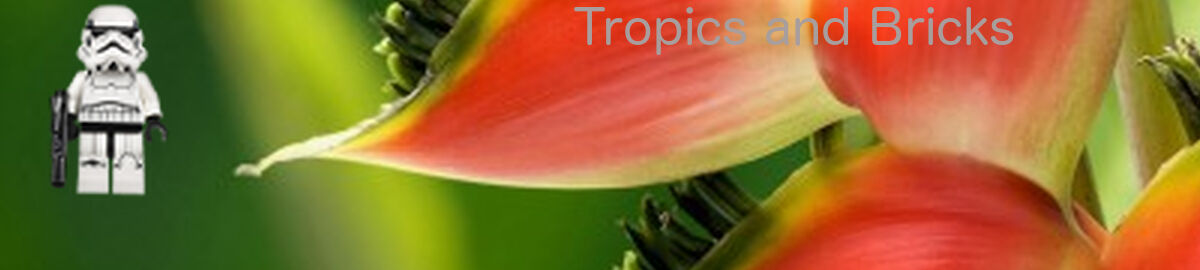 Tropics And Bricks