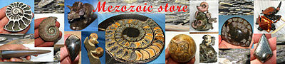 mezozoic