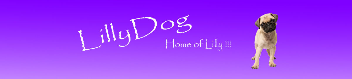 LillyDog2015 - Alles für den Hund..