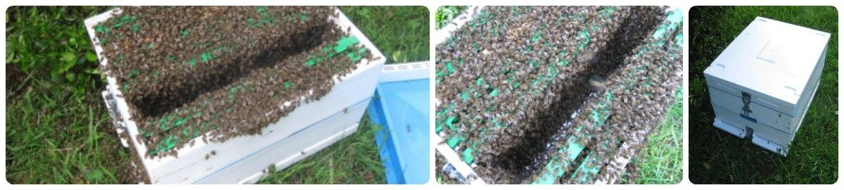 Better Bee Hives