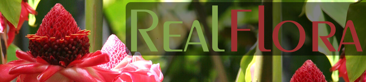 RealFlora-specialty-plants-and-more