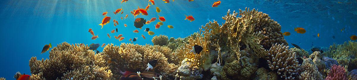 Reefnation