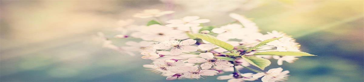 rainflowerwow 20 Forever