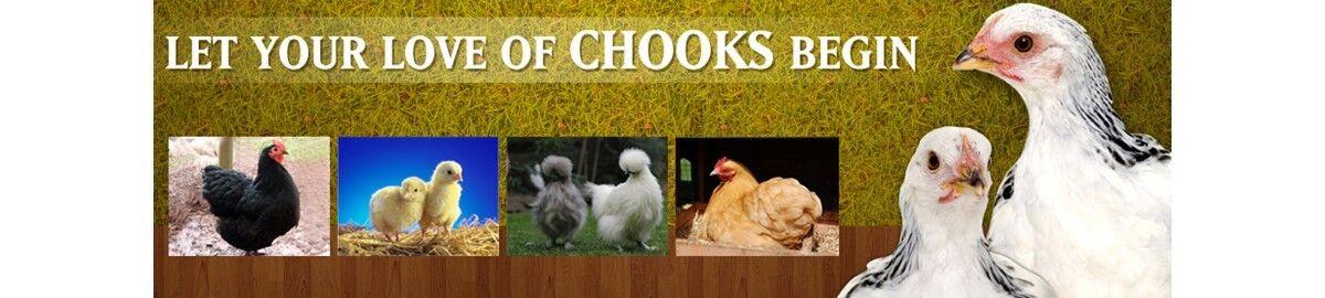 Suburban Chooks