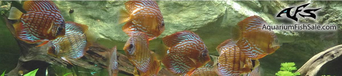 AquariumFishSale