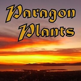 Paragon Plants