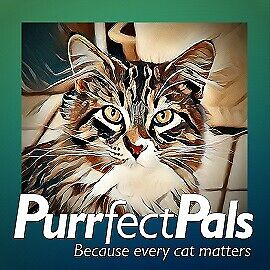 Purrfect Pals