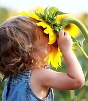 Wild Sunflowers Home Learning Centre **3 SPOTS AVAIL JAN**