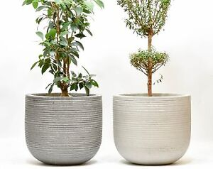 LOOKING FOR Large Planter For Fig Tree
