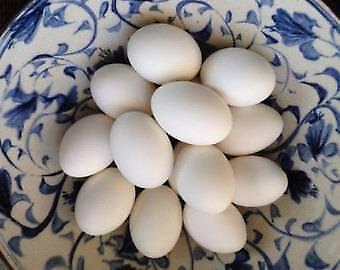 large fresh duck eggs  for eating