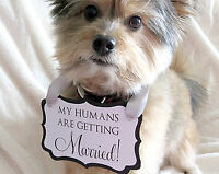 Include your Pet in the Wedding!