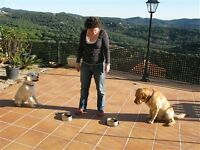 Dog training, exotic animals and pets, basic obedience, behaviour exchange and puppy socialization