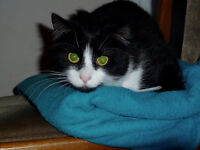 Two friendly cats desperately need rehomed