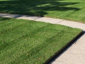 LAWN MOWING - GARDENING - GUTTER CLEANING - PRESSURE CLEANING Wembley Cambridge Area Preview