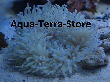 aqua-terra-store