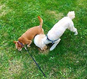 Pets Boarding in Richmond Hill