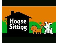 Professional House Sitter and Pet Sitter