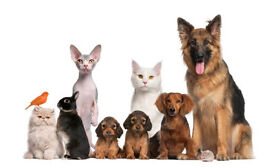 Qualified Pet Sitter Available, Newtownabbey and Belfast