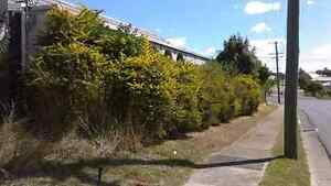 Hedge trimming ect .. Pine Mountain Ipswich City Preview