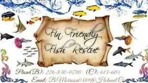 <3 A Safe Place to Rehome Your Unwanted Fish <3