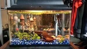 aquarium 5 gallon full équipe