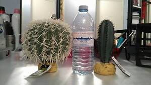 (2)Brand new cactus with tags