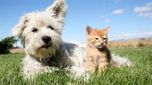 Pension petit chien et chat pour Rive-Sud Varennes Boucherville