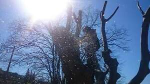 Qualified and experienced arborist