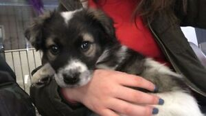 Paws for Love has a 10 week male puppy name Teo up for adoption