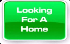 Family Home Needed