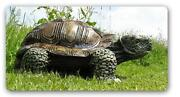 Schildkröte Figur