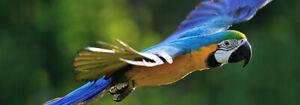 recherche grand perroquet