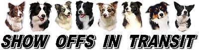 BORDER COLLIE  Show Off Dog Car Sticker by -